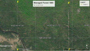 Managed Forest in Bruce Mines