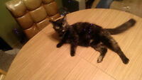 Very Afectionate Cat to a Loving home *** Pick up Asap - Moving