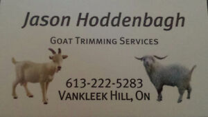 Hoof Trimming Services