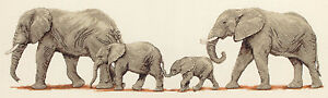 Anchor Elephant Stroll Counted Cross Stitch Kit PCE732