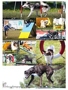 Agility classes for all levels
