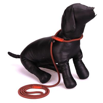 Adjustable Nylon Rope Slip Lead Training Brown Leash Collar Small Pet Dog Cat