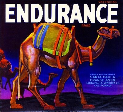 Santa Paula Ventura Endurance Camel Orange Citrus Fruit Crate Label Art Print