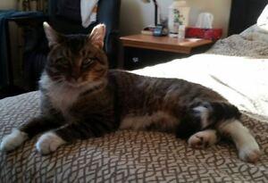 FOUND: Cat on Rankin Cr.