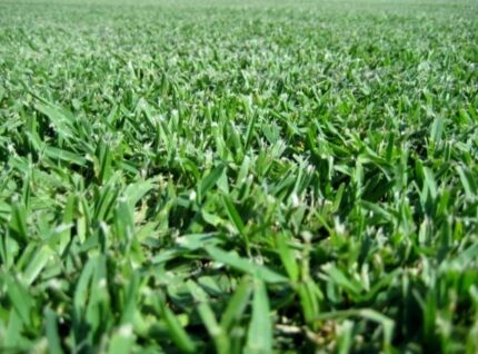 Soft Leaf Buffalo &Kikuyu Lawn/Turf...