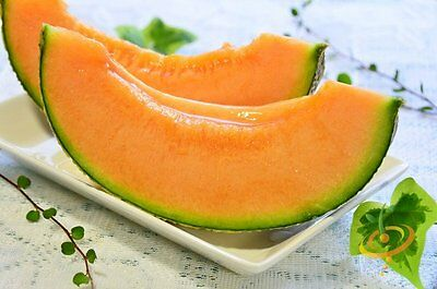50 Hales Best Jumbo Cantaloupe Seeds Non-GMO Heirloom USA SELLER Free