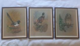 Set of three wildlife paintings