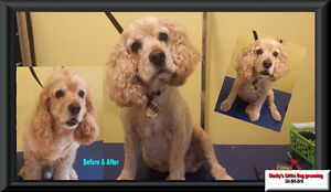 Shelly's Little Dog Grooming Regina Regina Area image 6