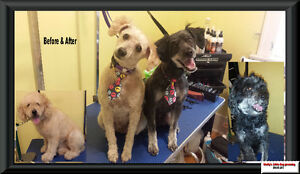 Shelly's Little Dog Grooming Regina Regina Area image 7
