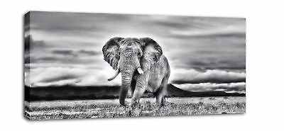 "EXTRA LARGE ELEPHANT CANVAS WALL PICTURE PRINT 44"" XL"