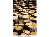 Conifer Logs