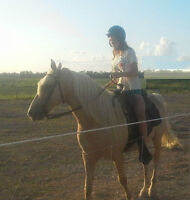 OUTDOOR HORSE BOARDING AVAILABLE