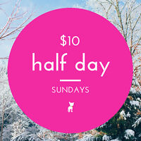 THE PAWSH DOG DAYCAMP - $10 Half Day Sundays