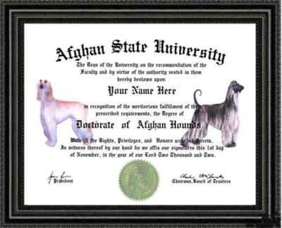 Afghan Hound Dog Lover's Diploma / Degree Custom made and Designed Gag Gift