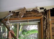 Termite & timber pest inspections from $249 all Sydney area's Chester Hill Bankstown Area Preview