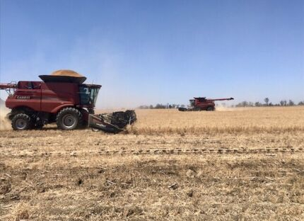 Harvest Contractor Lameroo Southern Mallee Preview
