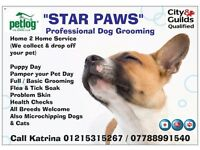 STAR PAWS DOG GROOMING AND MICROCHIPPING SUMMER SPECIALS !!