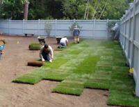 6479362737 sod installation guaranteed job in reasonable price