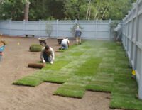 Grass Replacement, Sodding, Full lawn Services, Clean up & more