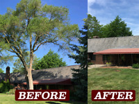 Tree removal and more