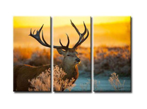 3 in 1 Deer Canvas Picture