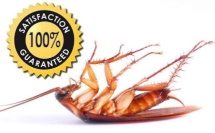 End of lease pest control start $79