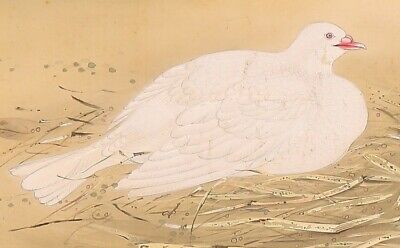 JAPANESE PAINTING HANGING SCROLL JAPAN Pigeon BIRD ANTIQUE PICTURE OLD ART d441