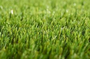 Artificial Lawn (Tuff Turf Brand) Cloverdale Belmont Area Preview