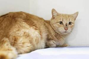 Shy boy at pound URGENTLY seeks a new home! Campbelltown Campbelltown Area Preview