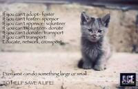 CA-R-MA Moncton has spayed/neutered cats & kittens for adoption