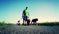 Dog Walking Services for the Region of Russell, Embrun etc....