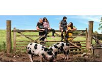 Live in Couple wanted for Farm and Accommodation Business Border of Wales
