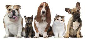 Dog walking/pet caring