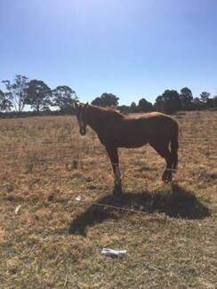 2 xTB horses for sale. Sound!