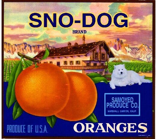 Marshall Canyon Samoyed Sno-Dog Dog Orange Citrus Fruit Crate Label Art Print