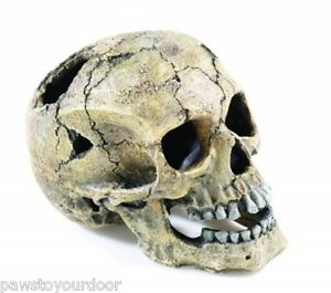 Details about Aquarium Fish Tank Human Skull Ornament Large 20cm Cave ...
