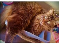 *ELI* 8 years old neutered male
