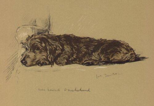 Wirehaired Dachshund - Lucy Dawson Dog Print - MATTED