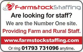 Assistant herdsperson/General farm worker