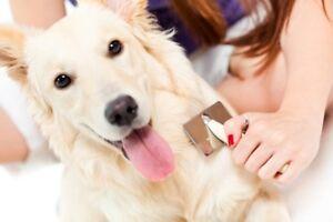 Recherche modèle chien pour formation en toilettage