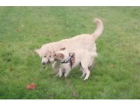 Dog walking in Hendon, Golders Green and Brent Cross