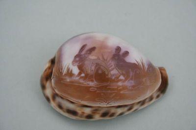 Tigermuschel mit geätztem Dekor - Hasen