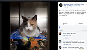 Cat found in Clayton Park - facebook group Lost and Found cats..