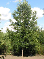 VERY AFFORDABLE !!!!TIMBER WOLF TREE SERVICE-INSURED