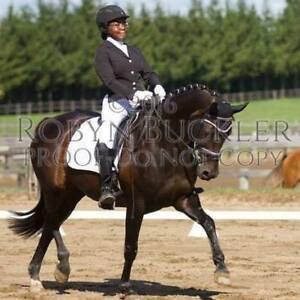Part Board or Full Lease ( 18 year old dressage school master)