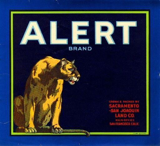 Sacramento Alert Cougar Mountain Lion Orange Citrus Fruit Crate Label Art Print