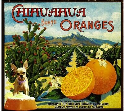 Marshall Canyon Chihuahua Toy Dog Orange Citrus Fruit Crate Label Art Print