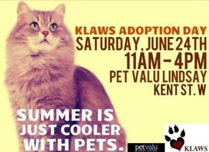KLAWS: Adoptathon June 24th: 11 AM until 4PM in Lindsay!