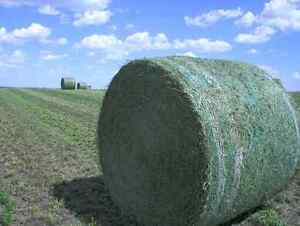 Quality Round  Hay bales