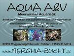 Aqua A&V Meerwasseraquaristik